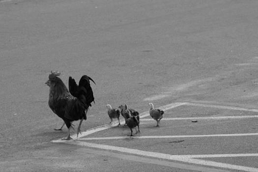 Aint Chicken by Sean Green