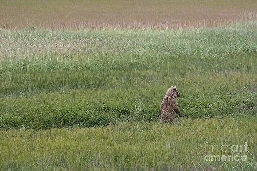 Alaska Bear by Lori Bristow