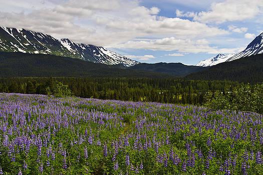 Wes and Dotty Weber - Alaska Lupine