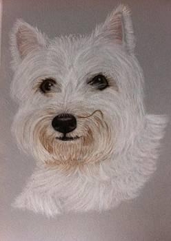 ALFIE a pastel portrait by Hillary Rose