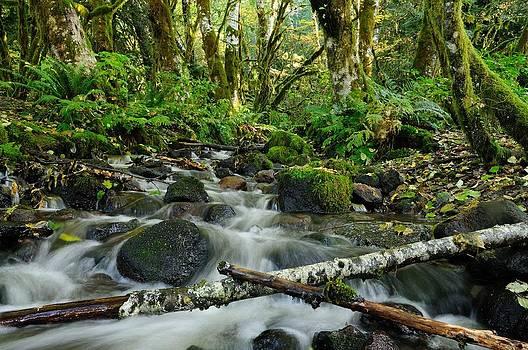 Alice Creek by Sandra Sigfusson
