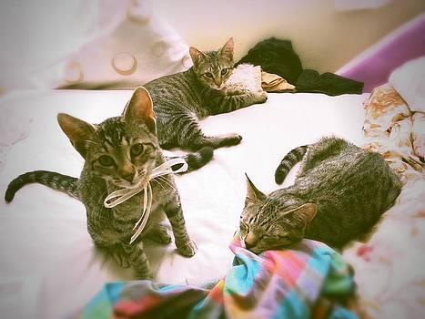 All 3 Kittens Together  by Gemma Geluz