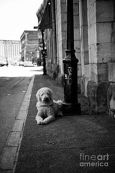 All Alone by Leslie Leda