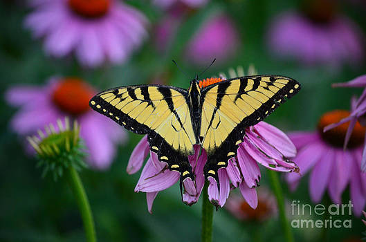 All Fanned Out by Sue Stefanowicz