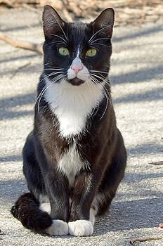 Lisa Phillips - Alley Cat