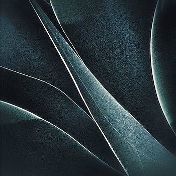 Aloe Abstract by Felice Willat