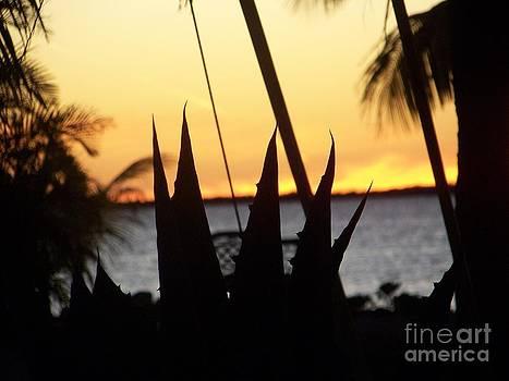 Aloe by Sandra Starling