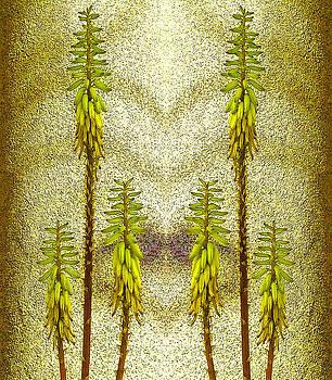 Aloe Vera blooming by Jesus Nicolas Castanon