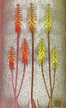 Aloe Vera mix by Jesus Nicolas Castanon