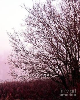 Along a Misty Bank by Michelle Bergersen
