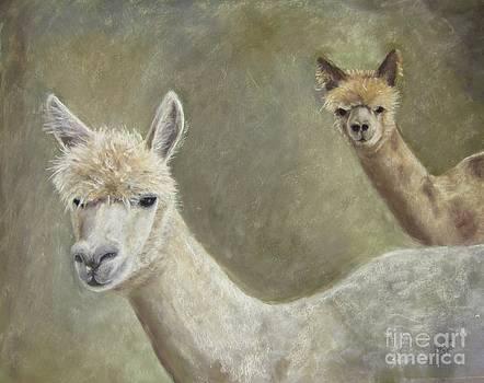 Alpacas by Elizabeth Ellis