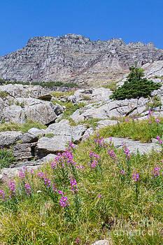 Alpine Abundance 3 by Katie LaSalle-Lowery