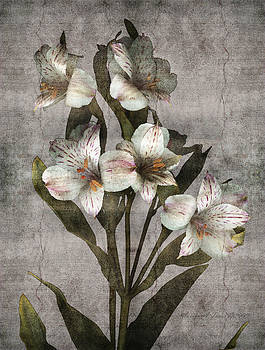 Marsha Tudor - Alstroemaria Fresco