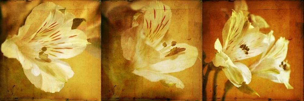 Alstroemeria's by Cathie Tyler