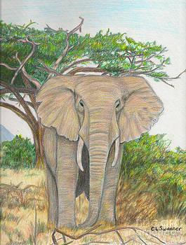 Amboseli Elephant by C L Swanner