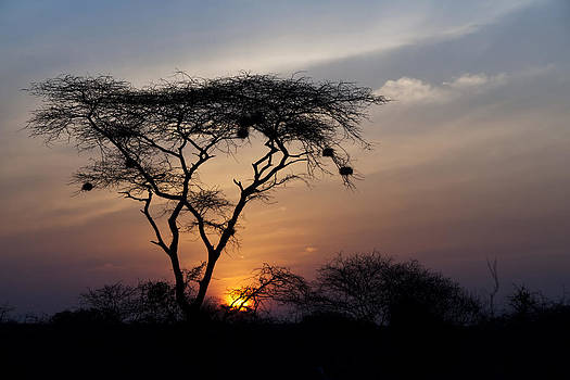 Amboseli Sunrise by Marion McCristall
