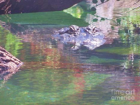 American Alligator 1 by Lorrie Bible