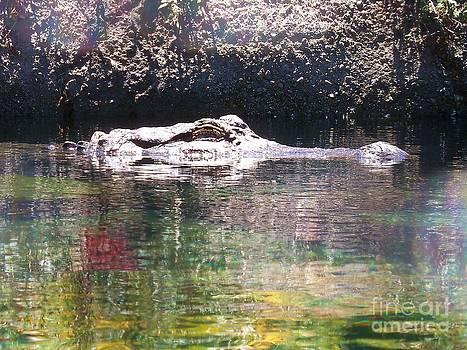 American Alligator 2 by Lorrie Bible