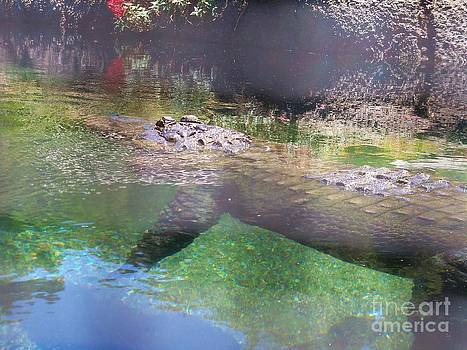American Alligator 5 by Lorrie Bible