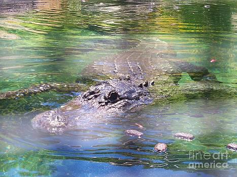 American Alligator 6 by Lorrie Bible