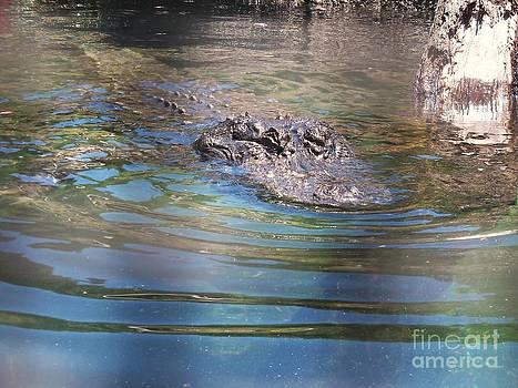 American Alligator 7 by Lorrie Bible