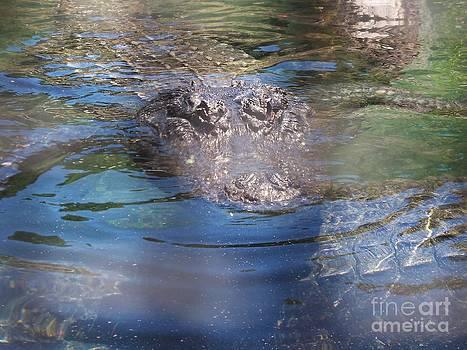 American Alligator 8 by Lorrie Bible