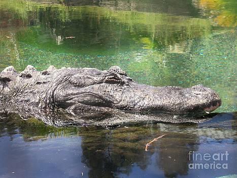 American Alligator 9 by Lorrie Bible