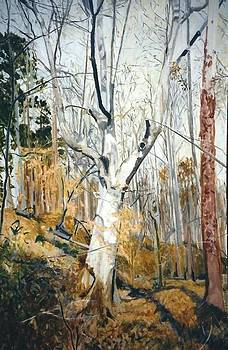 American Beech Tree by Terry Forrest