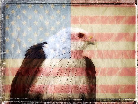 American Eagle Flag by Stephen Walker