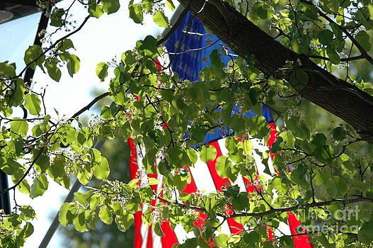American Flag by Curtis Brackett