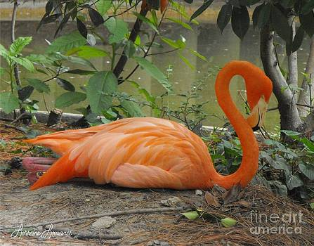 American Flamingo by Lorraine Louwerse