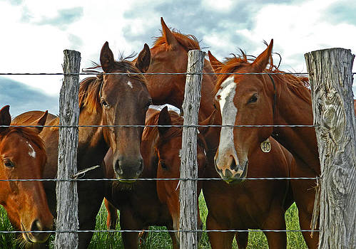 American Horses by Mamie Thornbrue