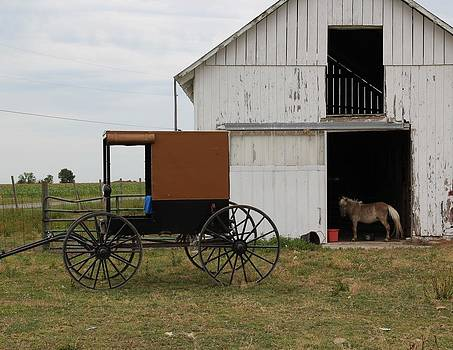 Amish Pony Barn by Donna Bosela
