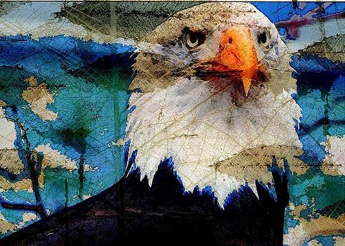 Carrie OBrien Sibley - American Bald Eagle
