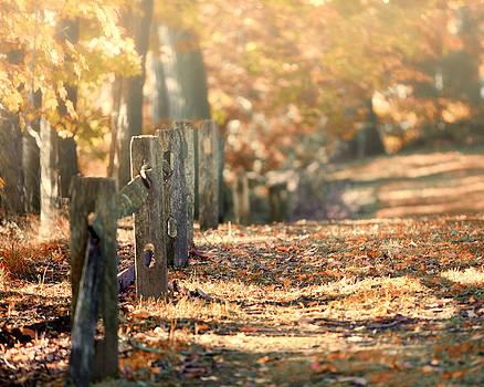 Lisa Russo - An Autumn Walk