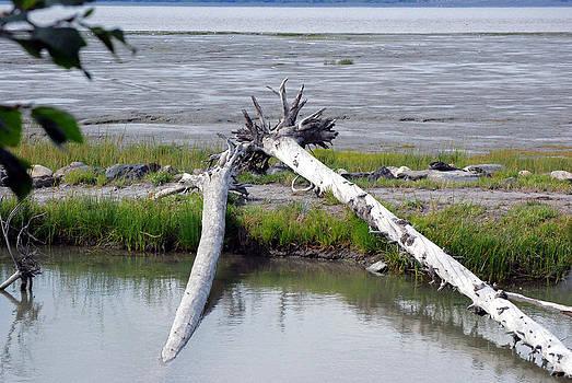 Harvey Barrison - Anchorage in August