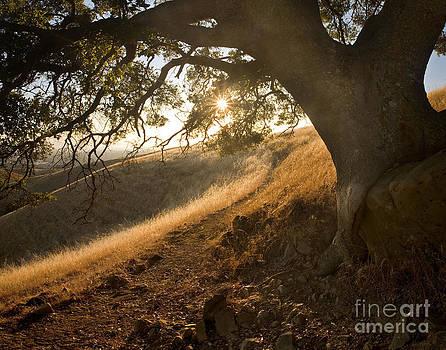 Ancient Sunset by Matt Tilghman