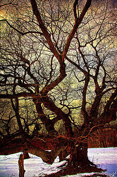 Ancient Winter Tree by Chris Lord