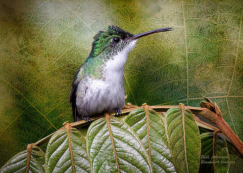 Andean Emerald by Ecuador Images