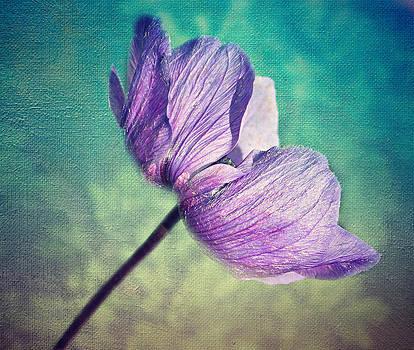 Anemone Floral Textures. by Rosanna Zavanaiu