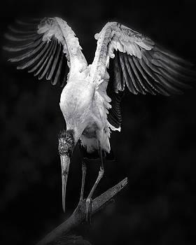 Angelic Stork by Robert Wicker