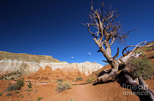 Adam Jewell - Angels Palace At Kodachrome Basin State Park - Utah