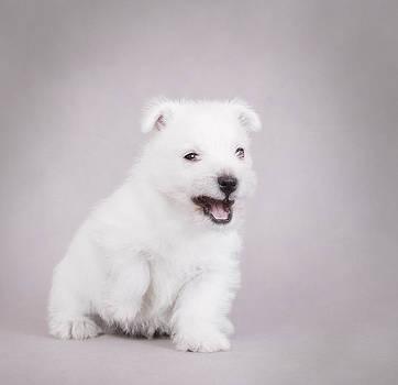 Waldek Dabrowski - Angry puppy