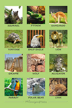 Animal Poster #1 by Michael Carrigan