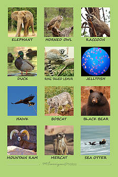 Animal Poster #2 by Michael Carrigan