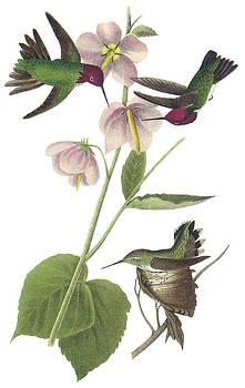 John James Audubon - Anna