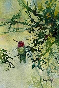 Anna's Hummingbird by Floy Zittin