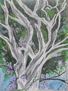 AnOld Eucalyptus tree with creepers by Iris Devadason