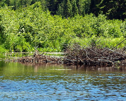 Another Beaver Dam by Kristal Kobold