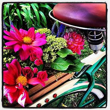 Antique Bicycle and Flowers by Jaye Howard